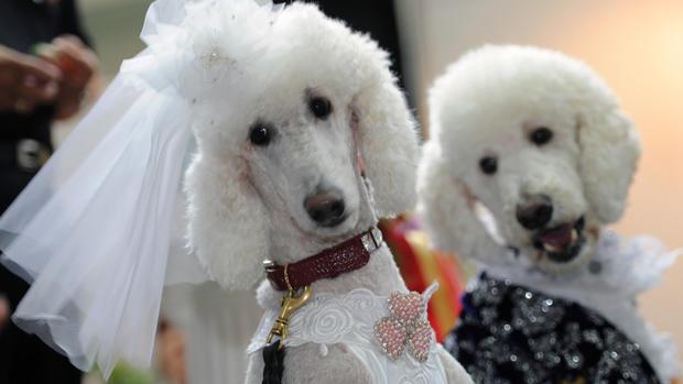 Dating für hunde