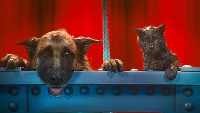 Cats & Dogs 2 Filmcheck Die Rache der Kitty Kahlohr