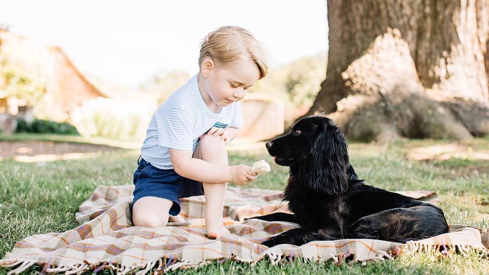 hunde schlecken bedeutung wichsen frauen
